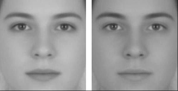 1.) Which face is male and which is female? ... ... wrong, they're the same androgynous face.