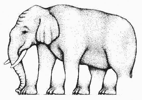 20.) How many legs does this elephant have? You sure?