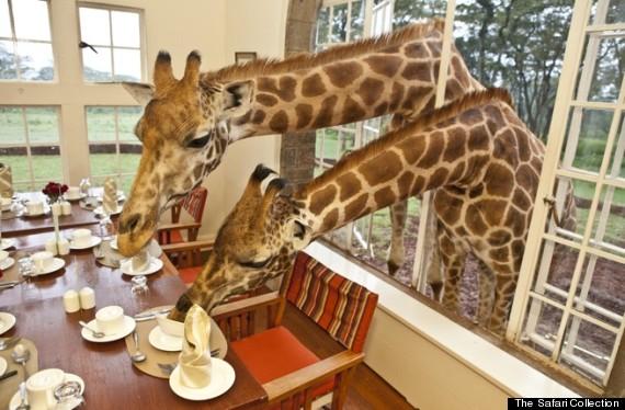 8.) Giraffe Manor - Kenya